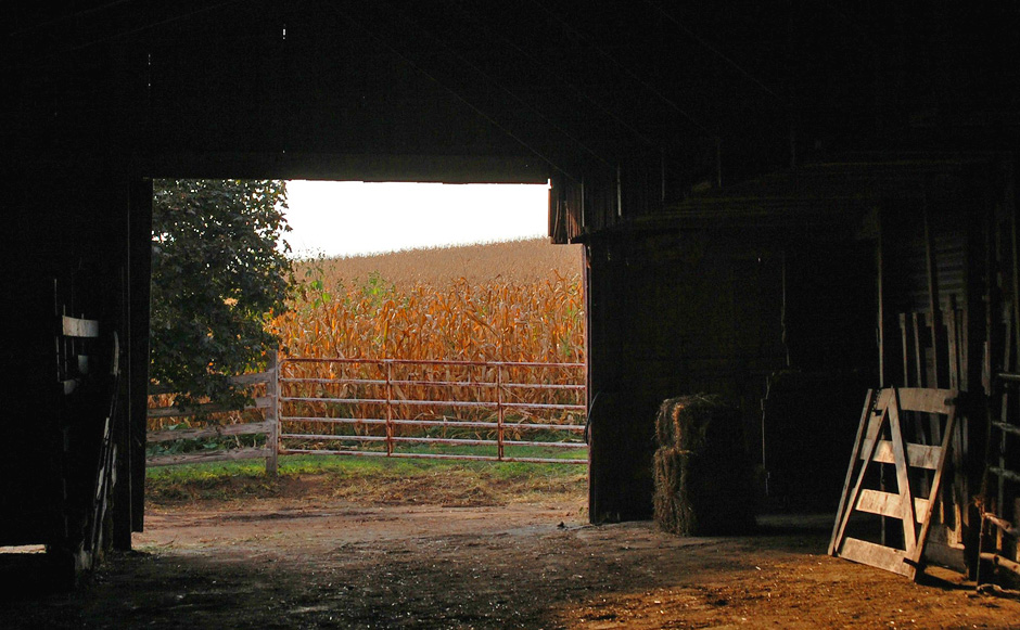 Looking out of Grandpa Kiko's barn on an autumn evening.