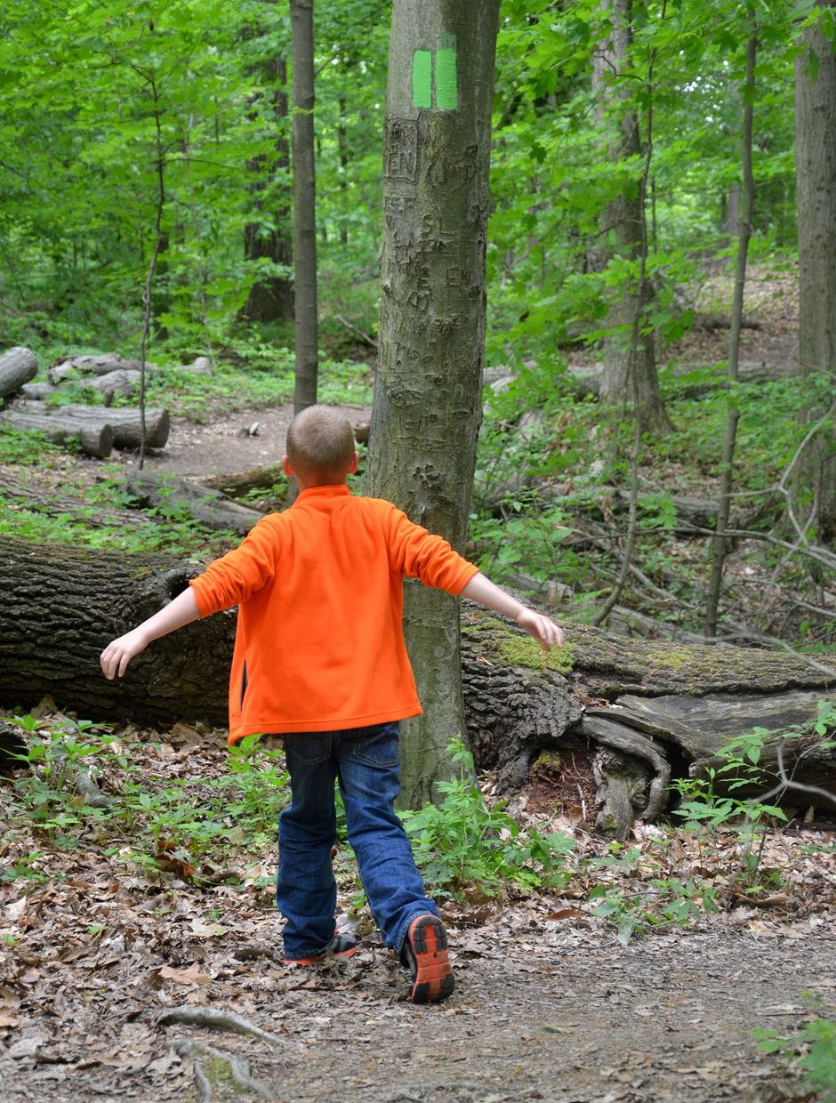 A walk in the woods reminds us to pause.