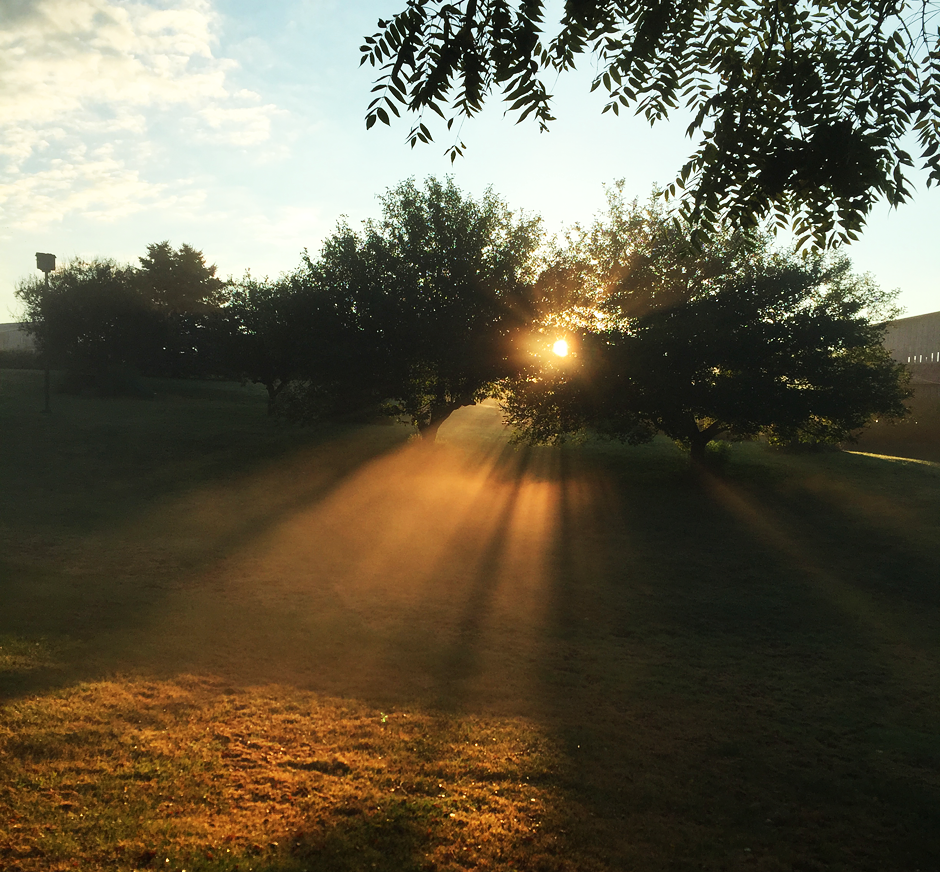 The light of a single sunbeam can wipe away many shadows. ~ Francis of Assisi