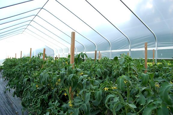 farm12