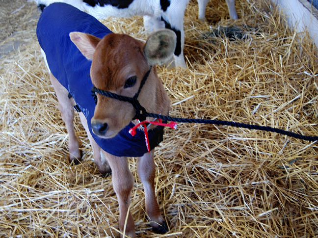 Dairy Sale Soap Opera Farmgirl Follies Jennifer Kiko