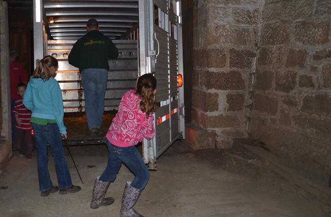 Stock trailer in bank barn