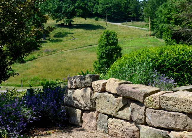 Stone wall, pasture and lavender
