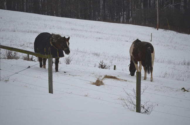 Horses in snow-covered pasture