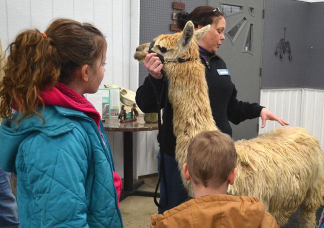 Kids with alpaca