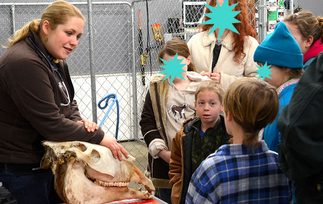 Kids looking at horse teeth with veterinarian