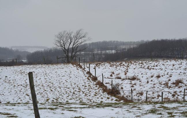 Barren, snowy landscape