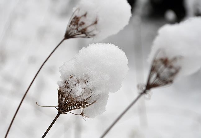 Walking on a snowy morning