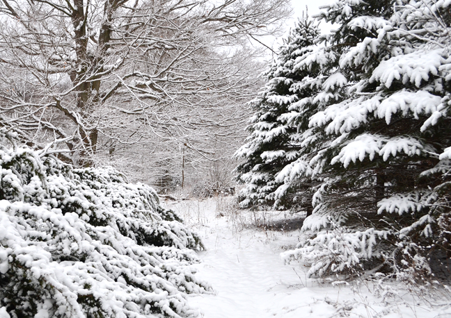 Snow-covered walking path through the trees