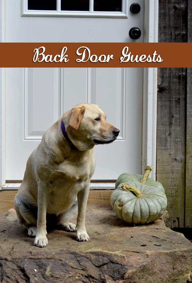 Back door greetings - Farmgirl Follies