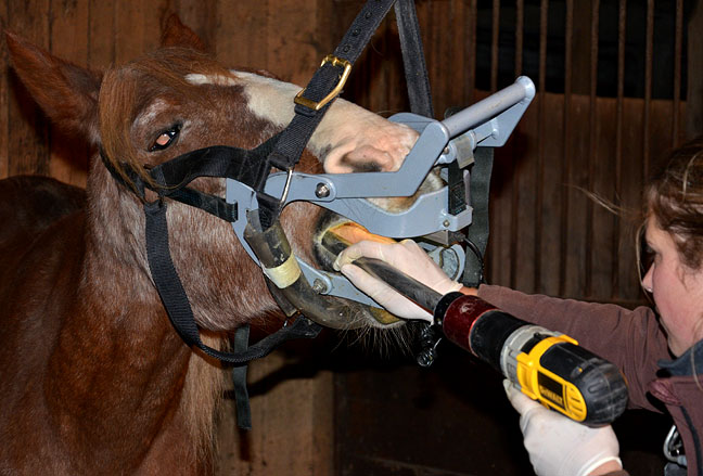 Floating a horses teeth means grinding down the sharp points.