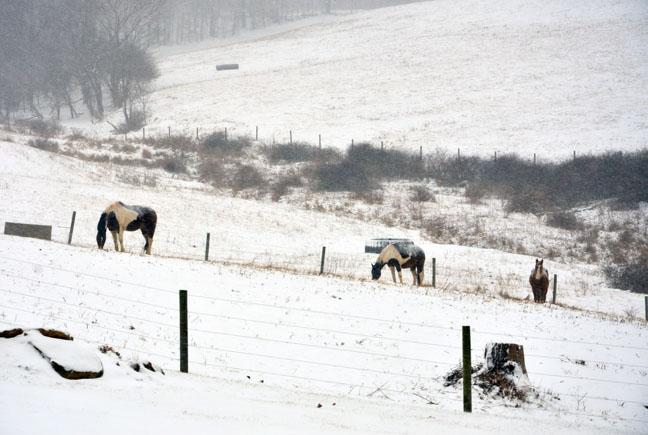 Horses in snowy pasture