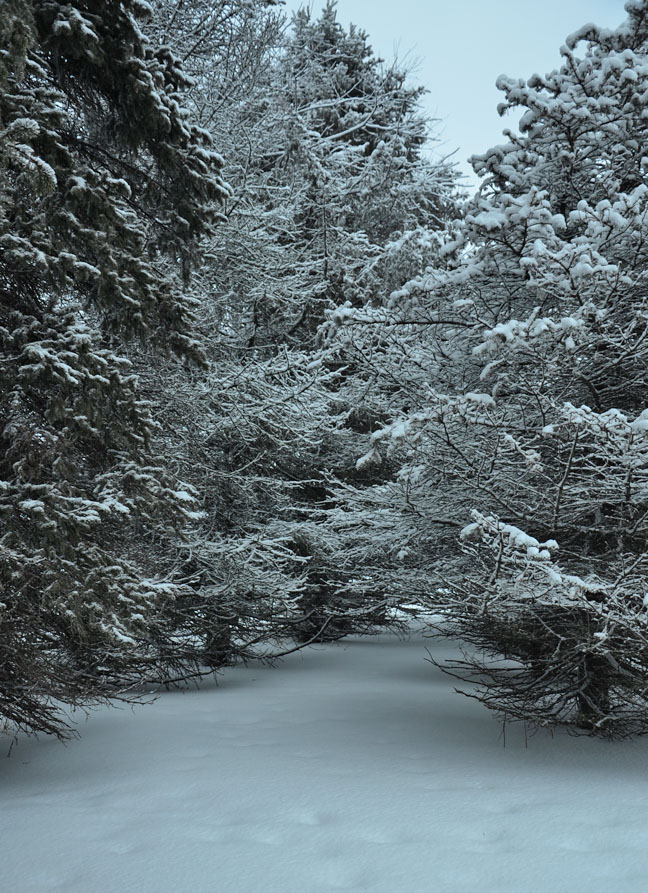 Snow path into the forest