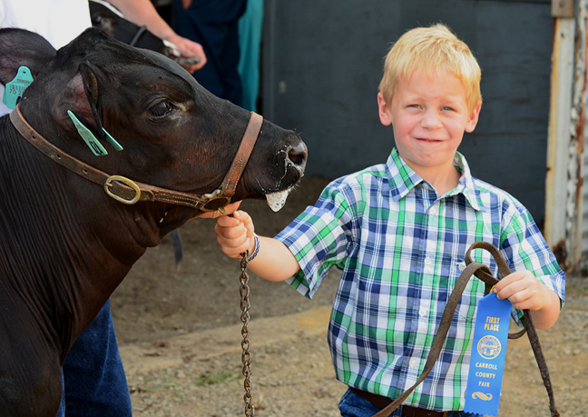 Boy showing heifer at the county fair