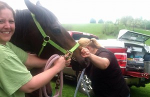 Tubing a horse to remove an obstruction.