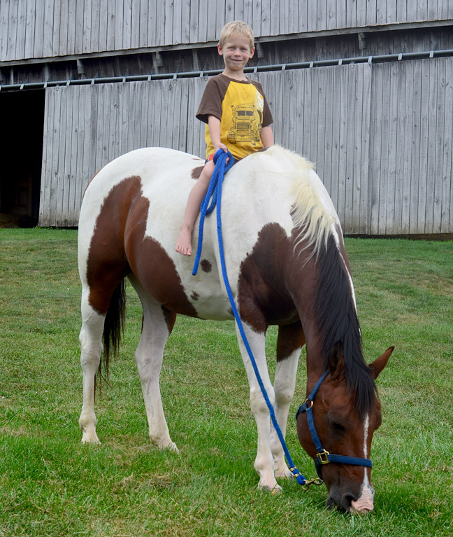The horse and his boy.