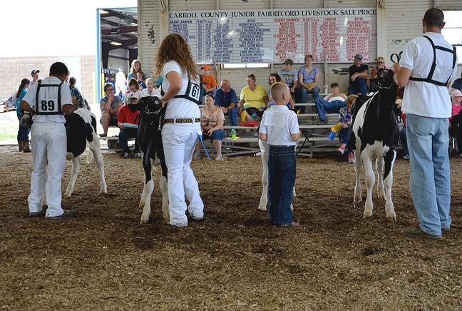 Dairy Show at the Carroll County Fair