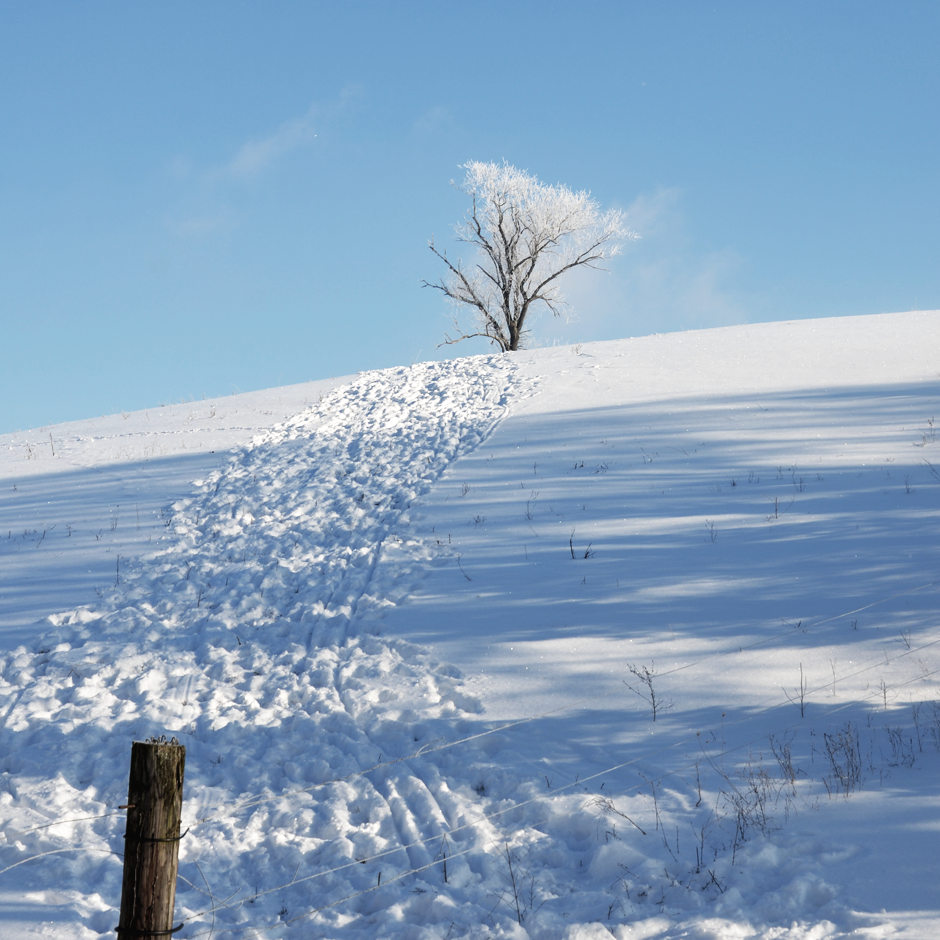 On a hill far away in winter.