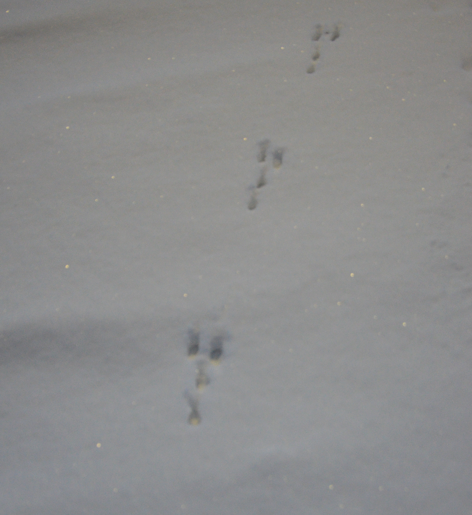 Making tracks in the snow