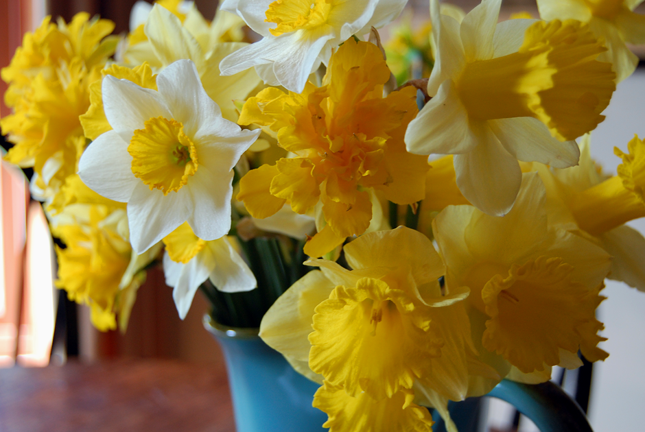 Daffodils in a turquoise vase
