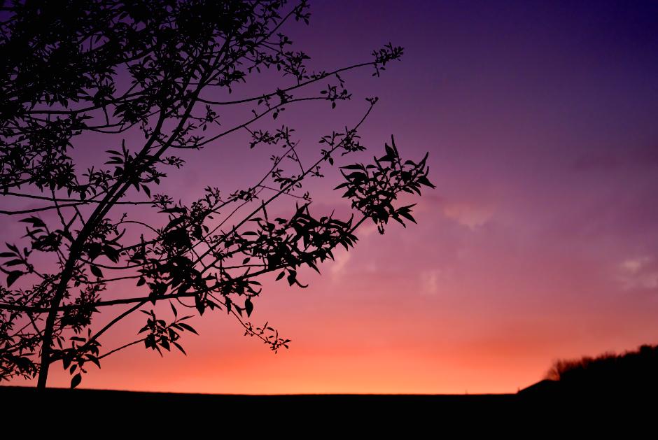 sunriseSpring