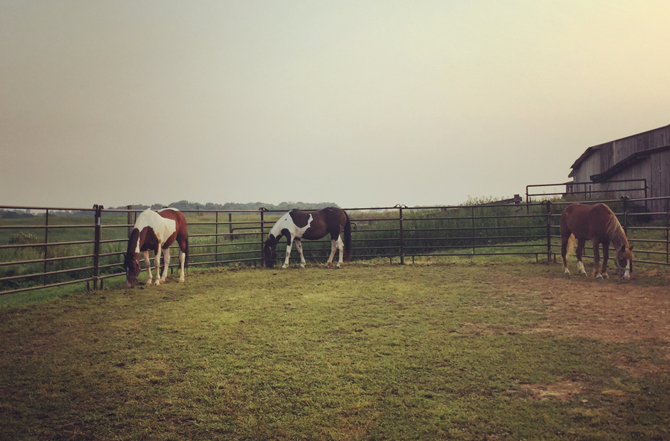 Horses at Tuckaway Farm