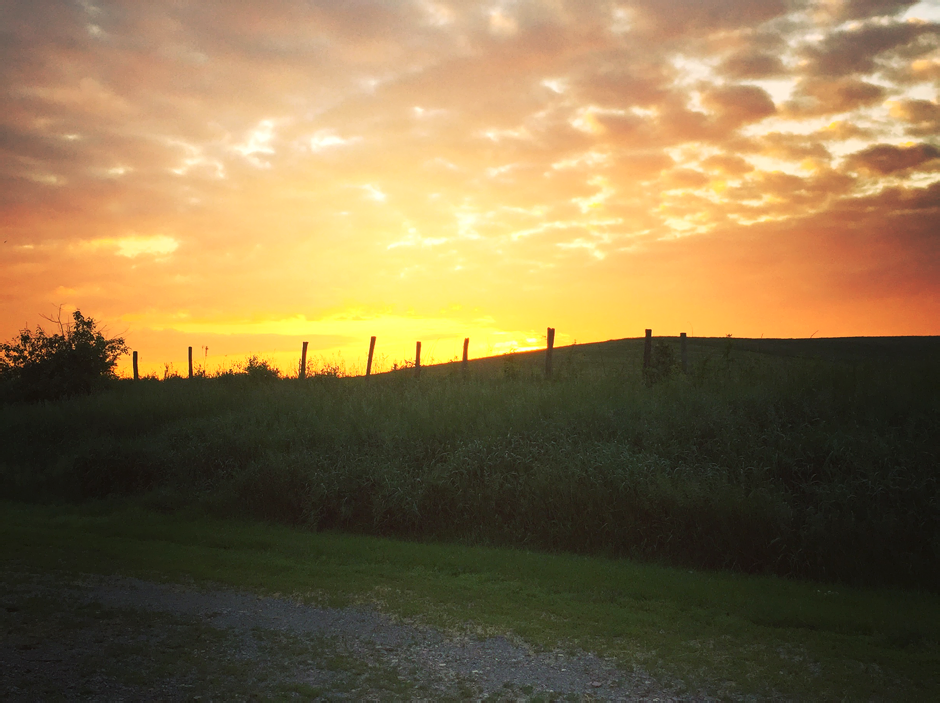 Summer sunrise at Tuckaway Farm.