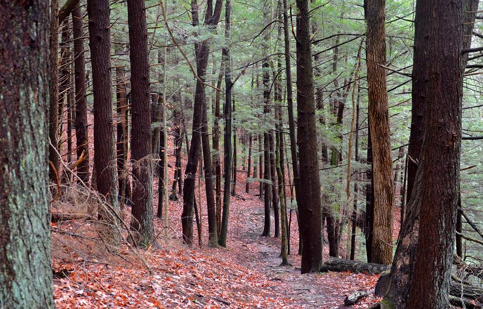 Camusfearna Gorge at Glenlaurel