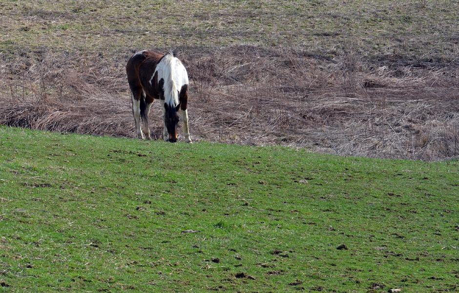 Green grass of spring.