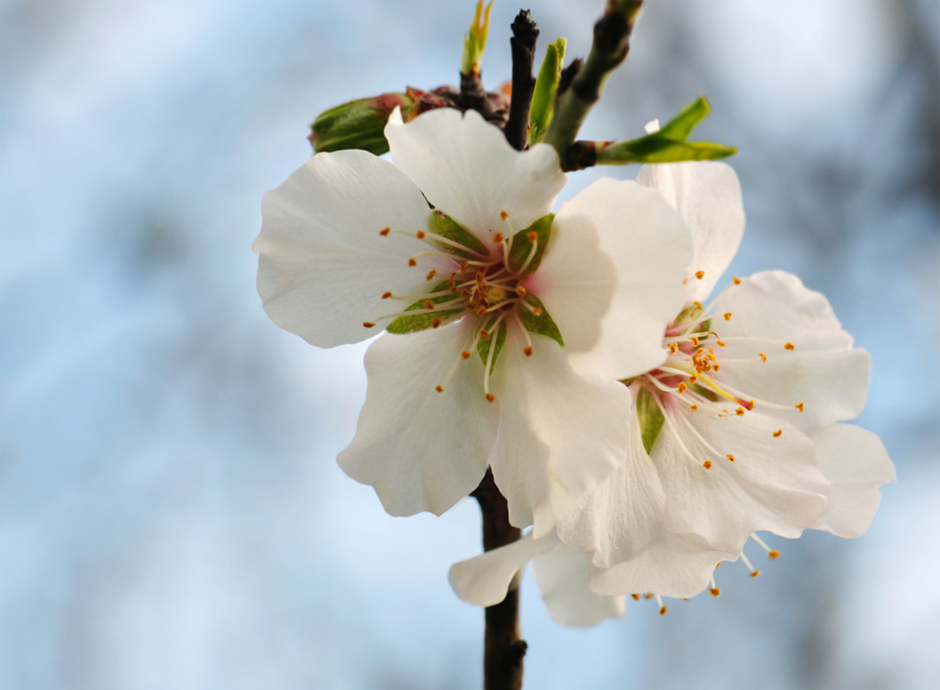 Hurting? Smell spring blossoms and rejoice in the newness.