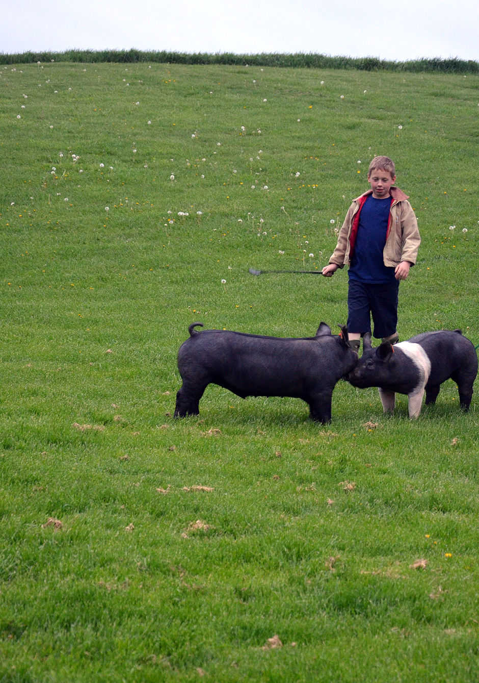 Walking the hogs